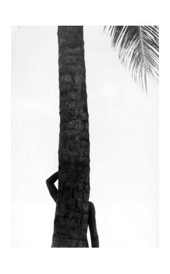 Elliott Erwitt, Palm Tree in Silhouette