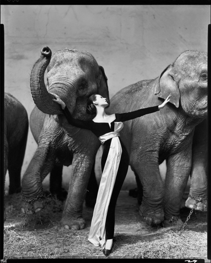 Richard Avedonm, Dovima and the Elephants