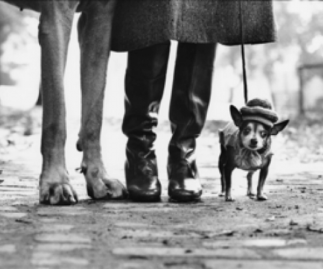Elliott Erwitt, Felix, Gladys and Rover, USA, New York, 1974