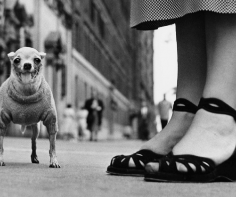 Elliott Erwitt, New York City 1946