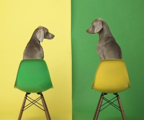 William Wegman, Yellow Two Green, 2015