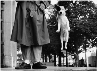 Elliott Erwitt, Paris, France, Dog Jumping, 1989