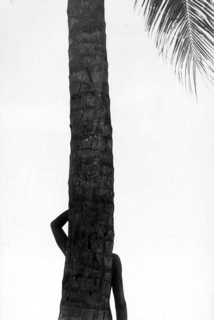 Elliott Erwitt, Palm Tree in Silhouette
