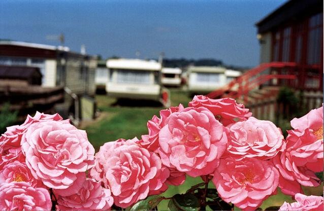 Martin Parr, Flowers West Bay, England, 1999